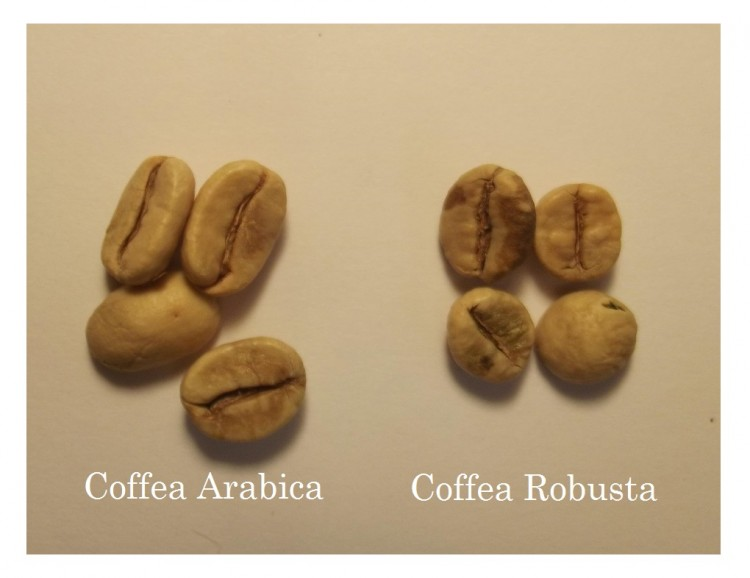 Свежеобжаренный кофе в зернах купить в москве аптека