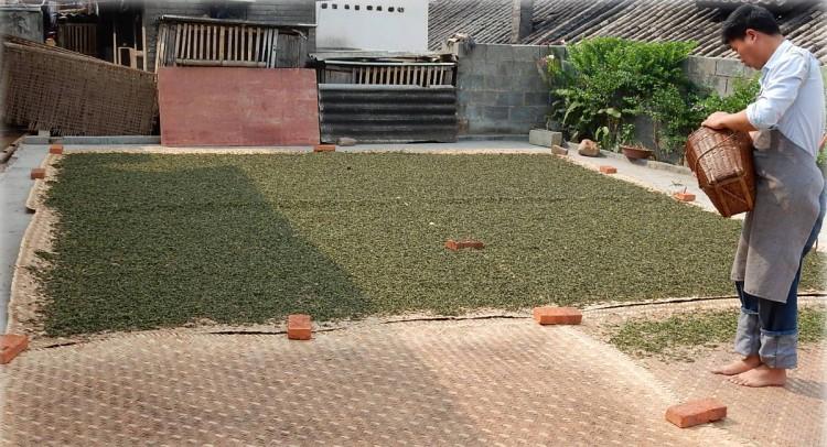 Сушка чая Би Ло Чунь