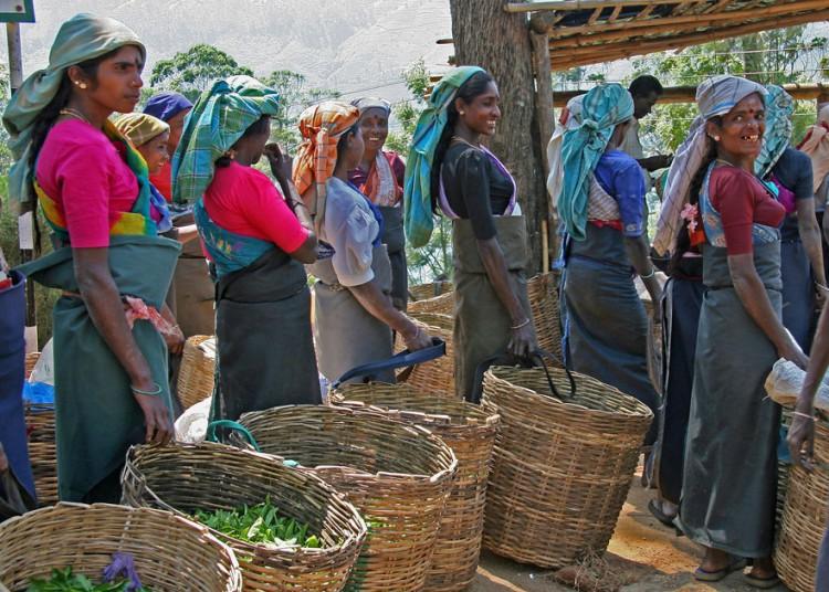 Женщины сдают урожай