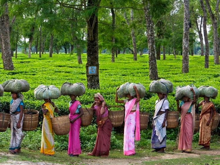 Женщины несут урожай