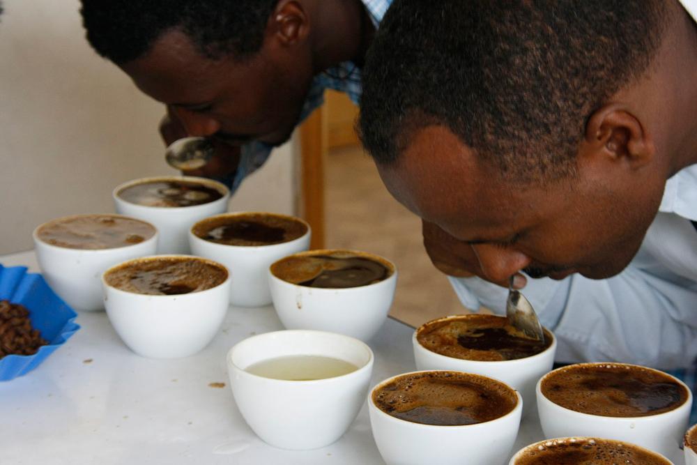 Оценка аромата кофе