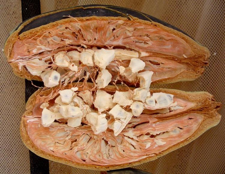 Семена баобаба