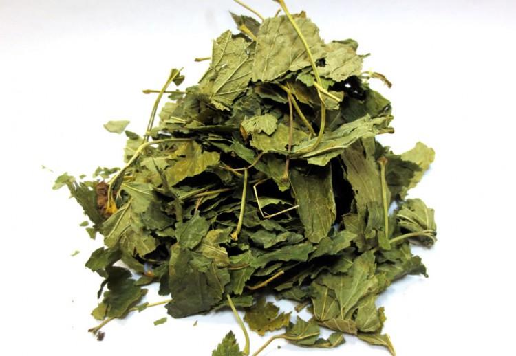 Сухие листья смородины