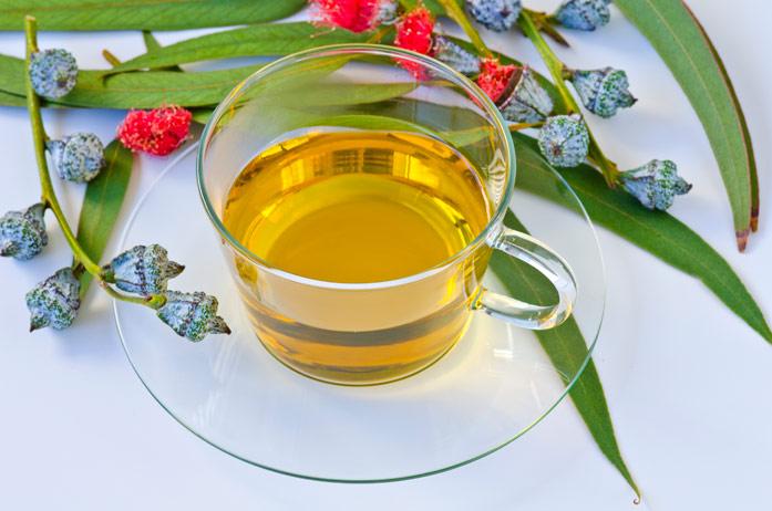 Эвкалиптовый чай