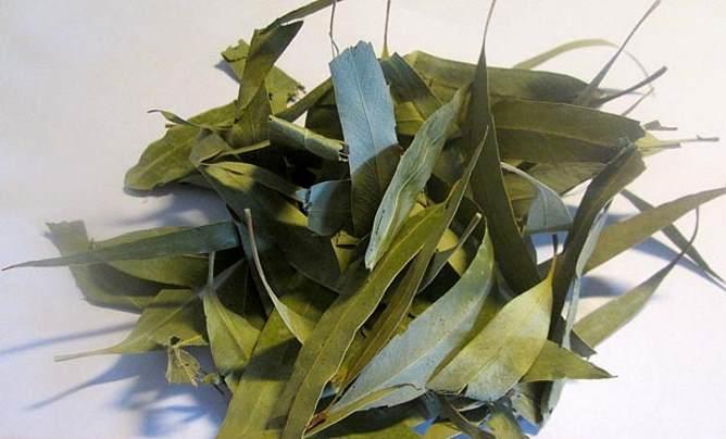 Листья эвкалипта сухие